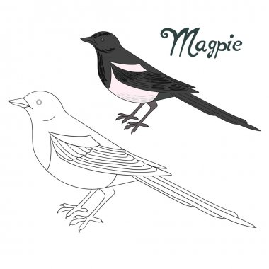 Educational game coloring book magpie bird