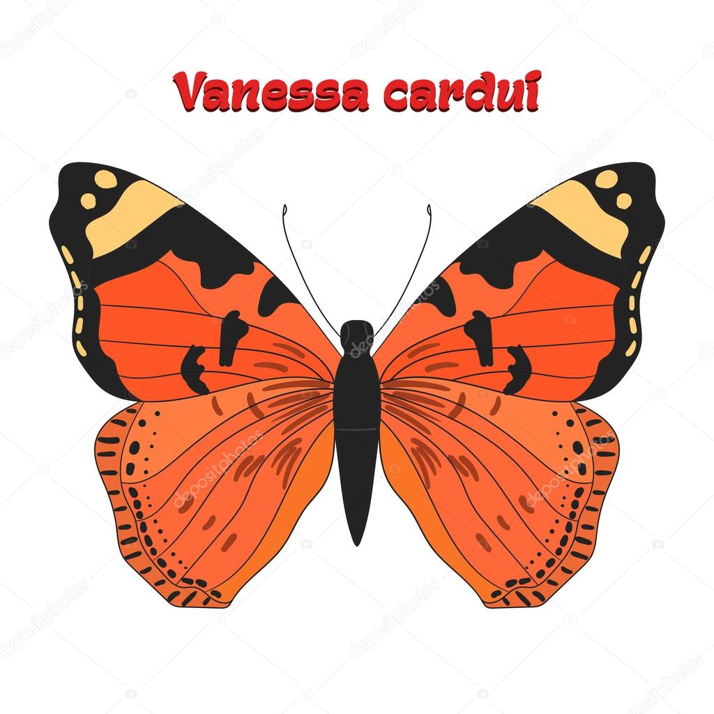 vanessa butterfly drawing images - HD1000×1080