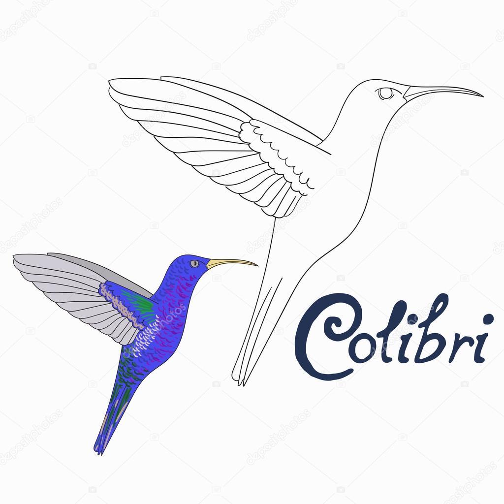 Juego educativo para colorear vector de aves libro colibri — Archivo ...