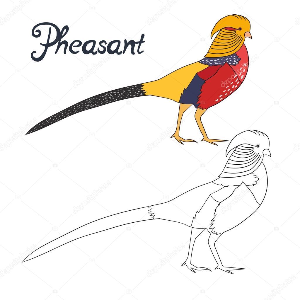 Juego educativo para colorear faisán libro aves — Vector de stock ...