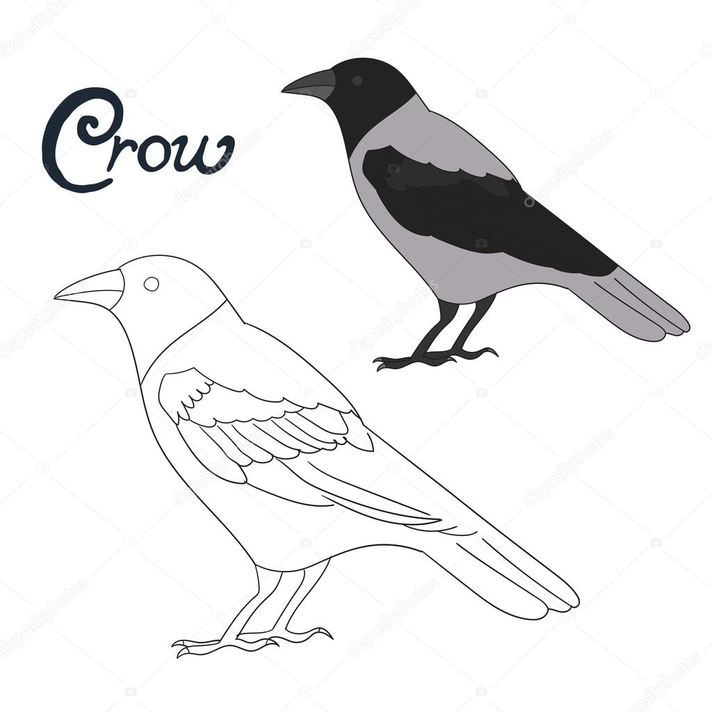 Educational Game Coloring Book Crow Bird Vector Stock Vector