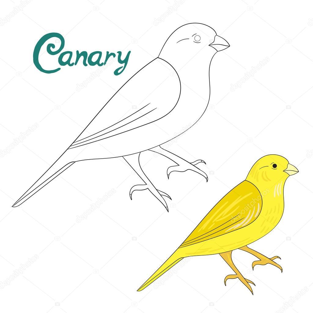 Pájaro de libro canario para colorear juego educativo — Vector de ...