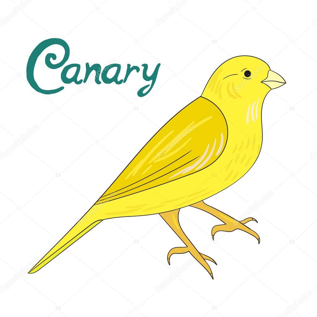 Kuş Kanarya Vektör çizim Stok Vektör Alexanderpokusay 87434706
