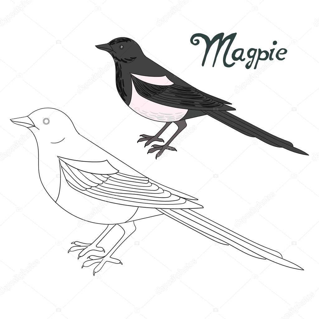 Educational Game Coloring Book Magpie Bird U2014 Stock Vector