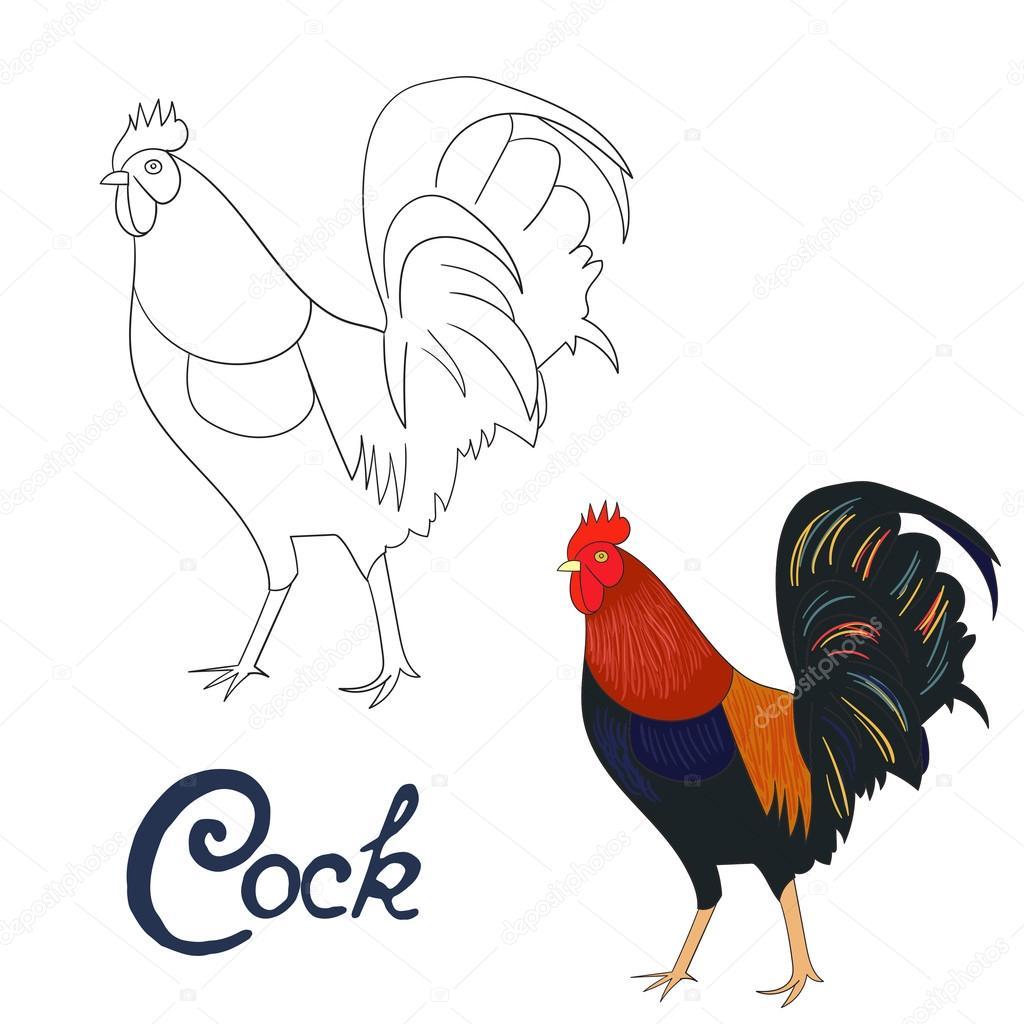 Juego Educativo Para Colorear Vector De Aves Libro Gallo Archivo