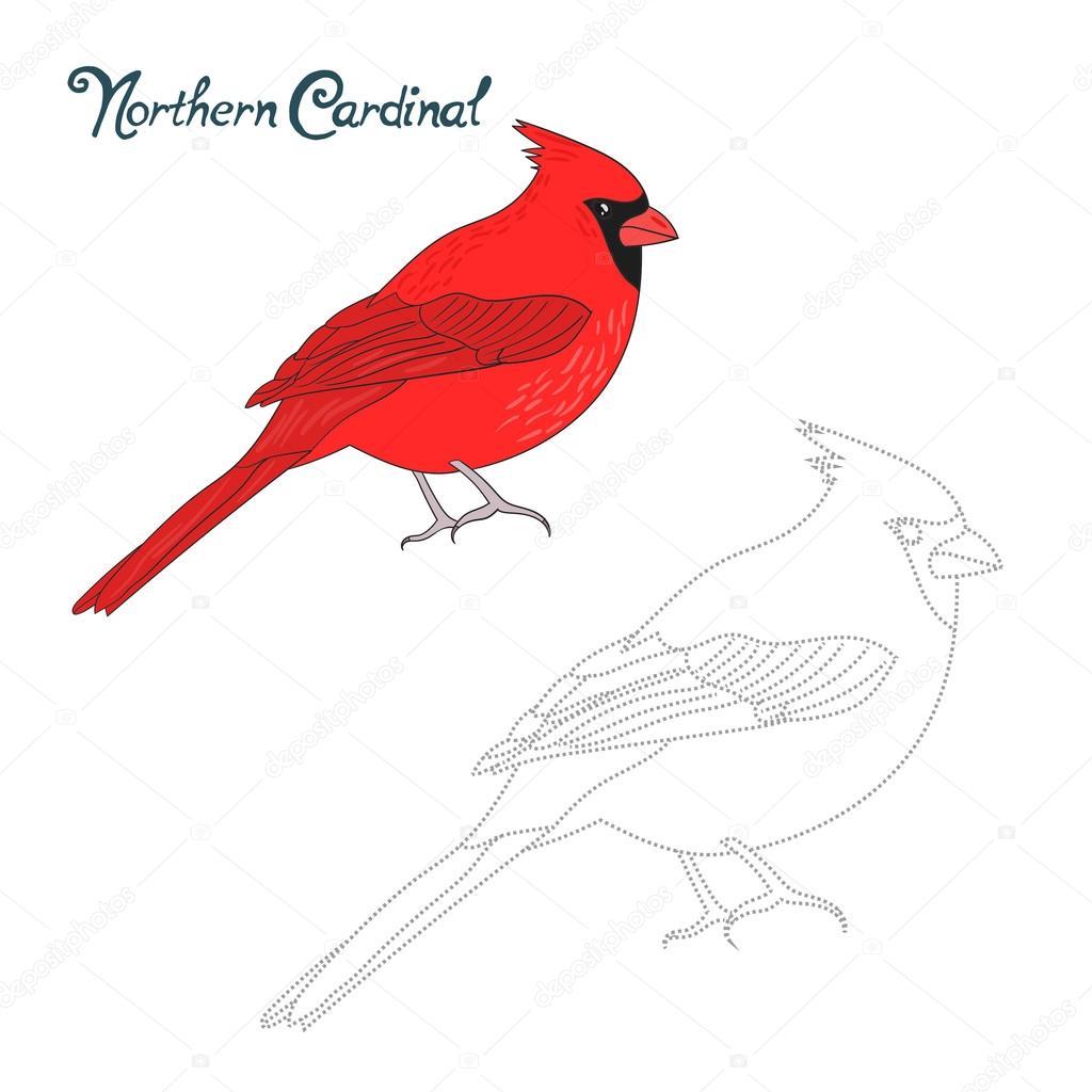 Juego educativo conecta puntos empate cardenal aves — Archivo ...