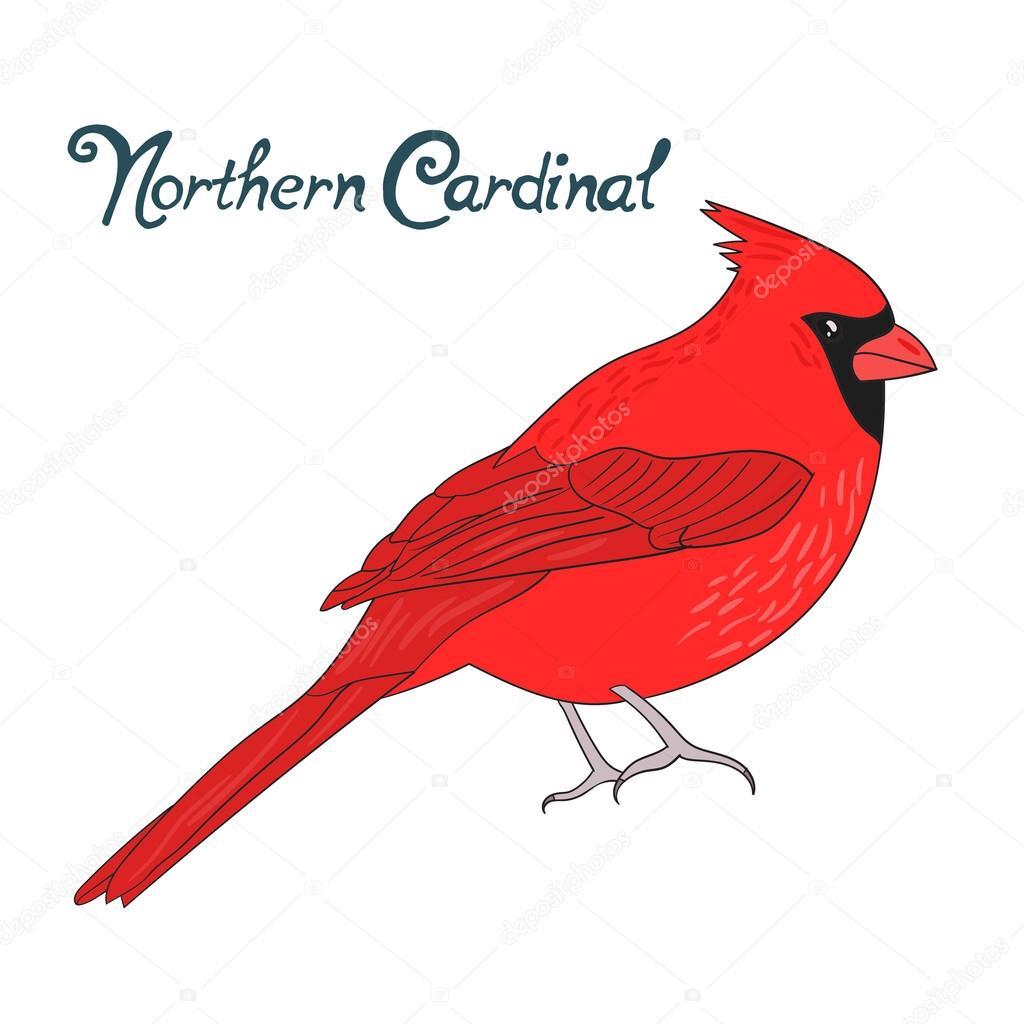 Ilustración de vector de cardinal norte Ave — Vector de stock ...