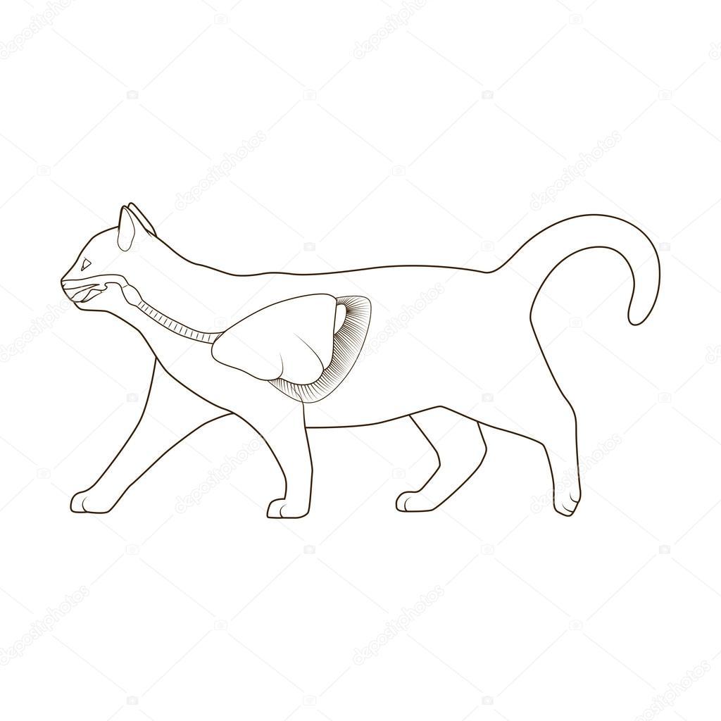 Sistema respiratorio de la ilustración de vector de gato — Archivo ...