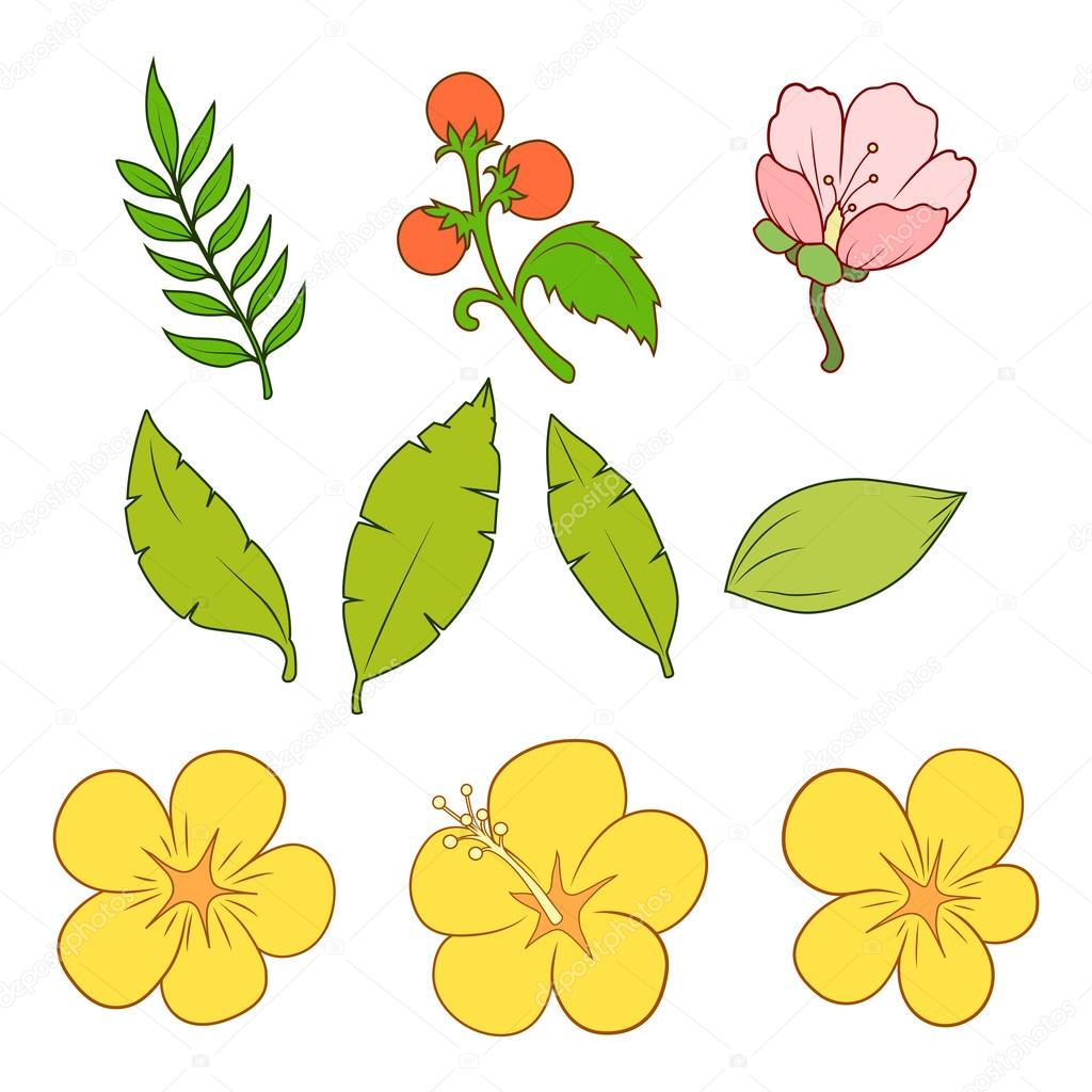 Floral elements vector illustration