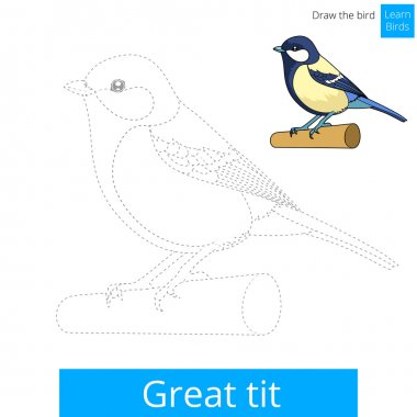 Great tit learn birds educational game learn to draw vector illustration clip art vector
