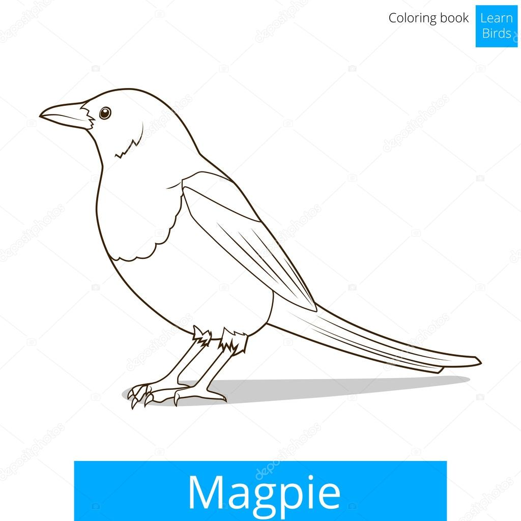 Magpie learn birds coloring book vector — Stock Vector ...