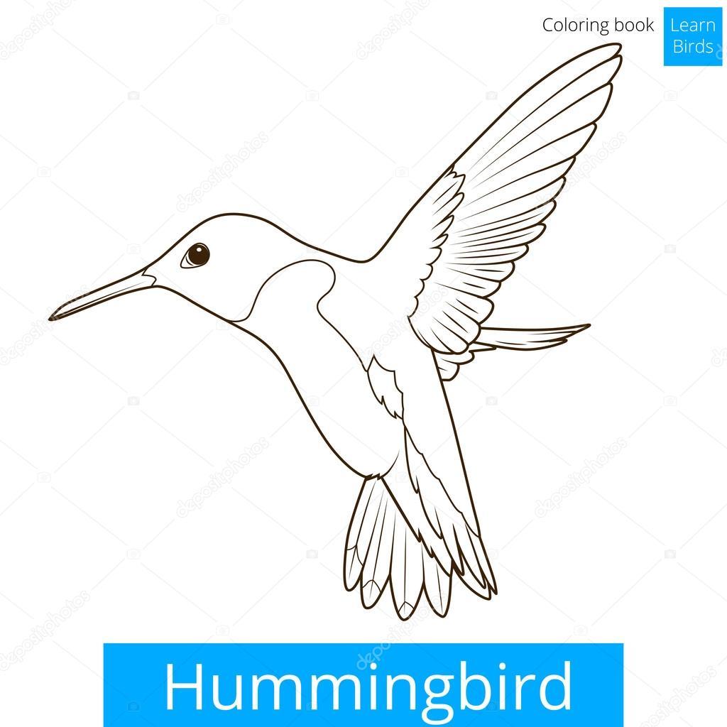 Colibrí aprender aves colorear vector libro — Archivo Imágenes ...