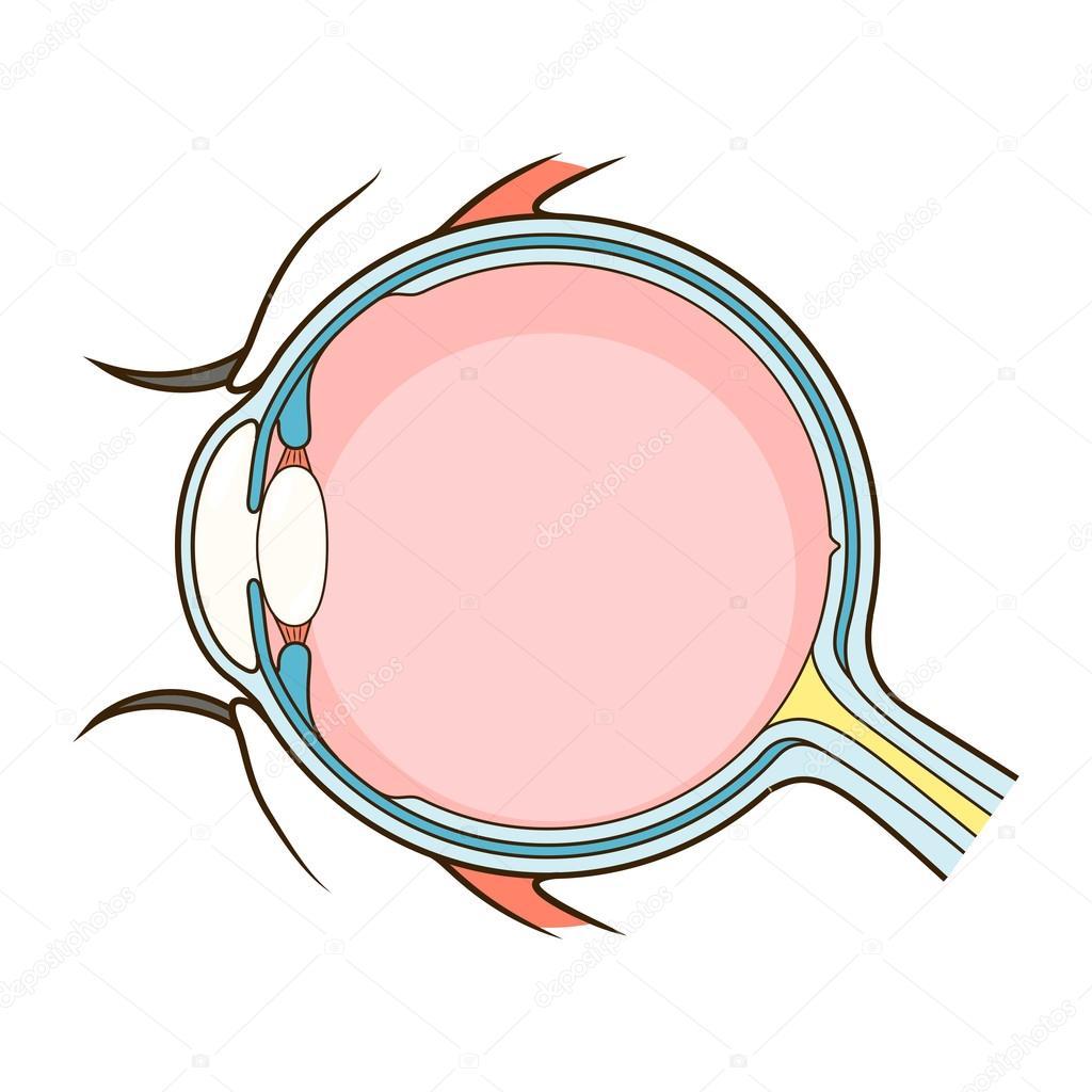 Vector de esquema de estructura de ojo humano — Vector de stock ...