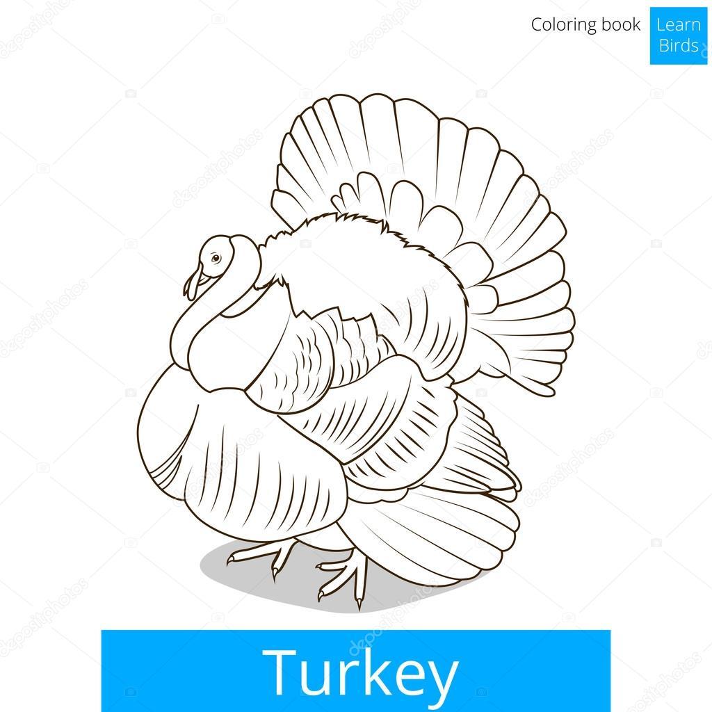 Ungewöhnlich Türkei Färbung Bilder Fotos - Entry Level Resume ...