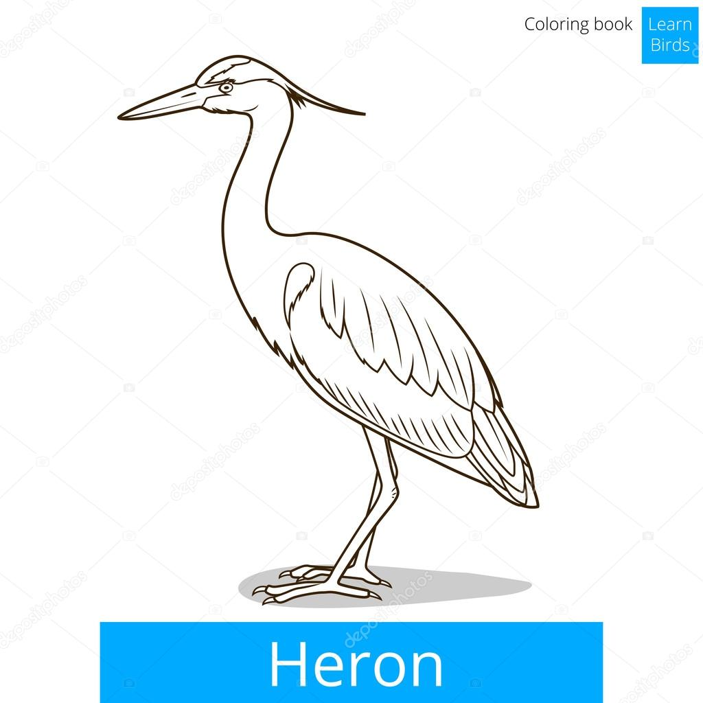 Heron learn birds coloring book vector — Stock Vector ...