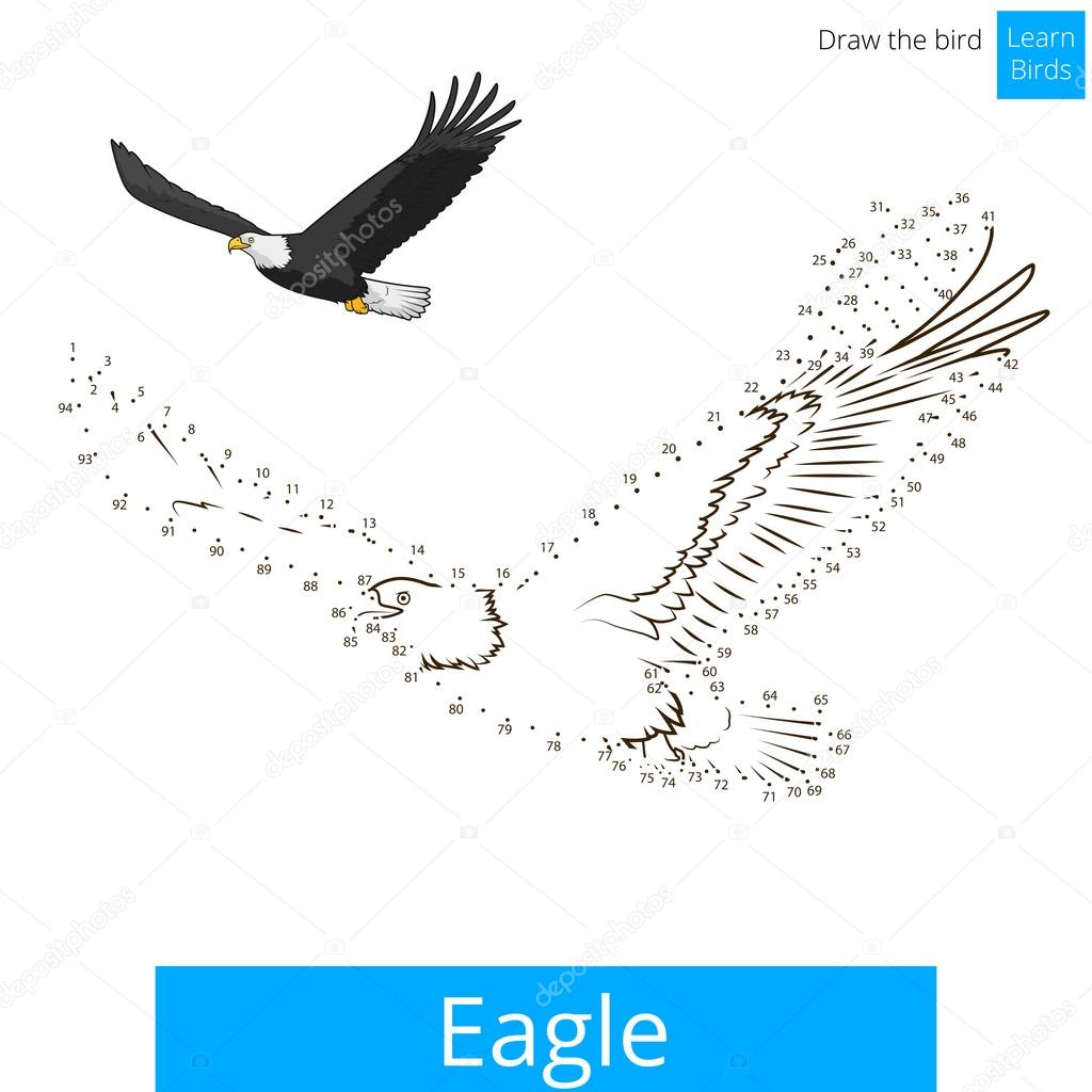 Eagle bird learn to draw vector — Stock Vector © AlexanderPokusay ...