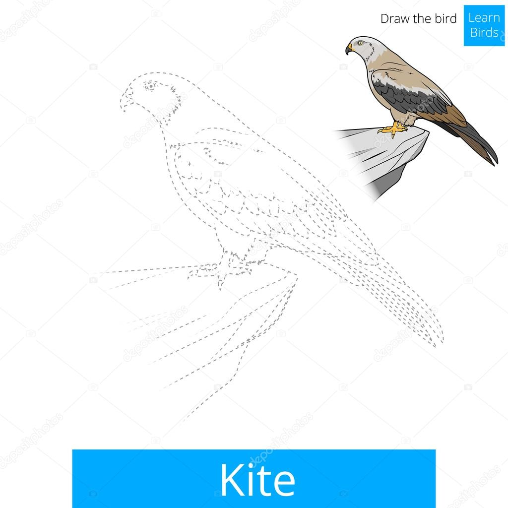 Pájaro de cometa aprender aves colorear vector libro — Vector de ...