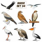Fotografia Illustrazione vettoriale colorato fumetto stabilito di uccello