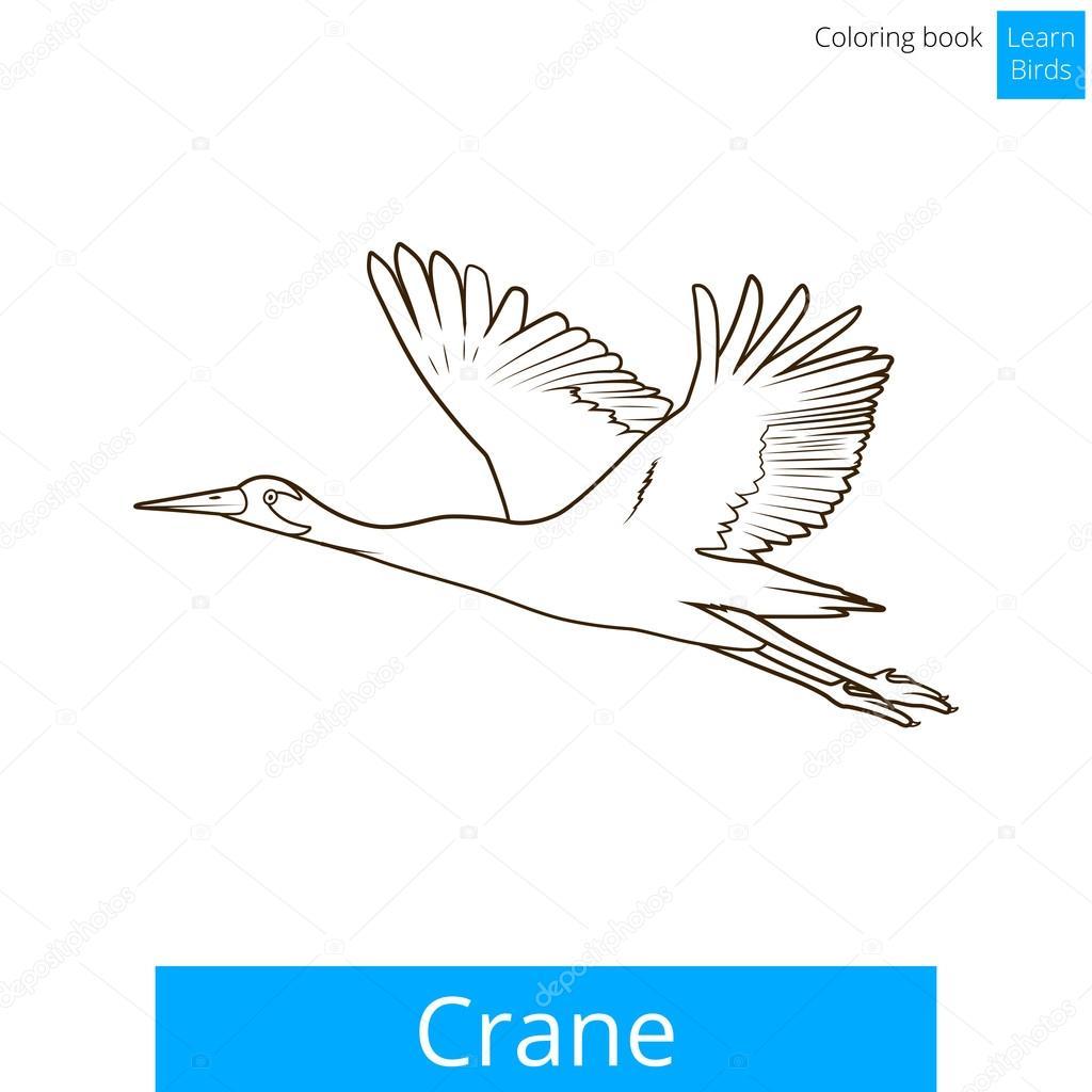 Pájaro de la grúa aprender aves colorear vector libro — Vector de ...