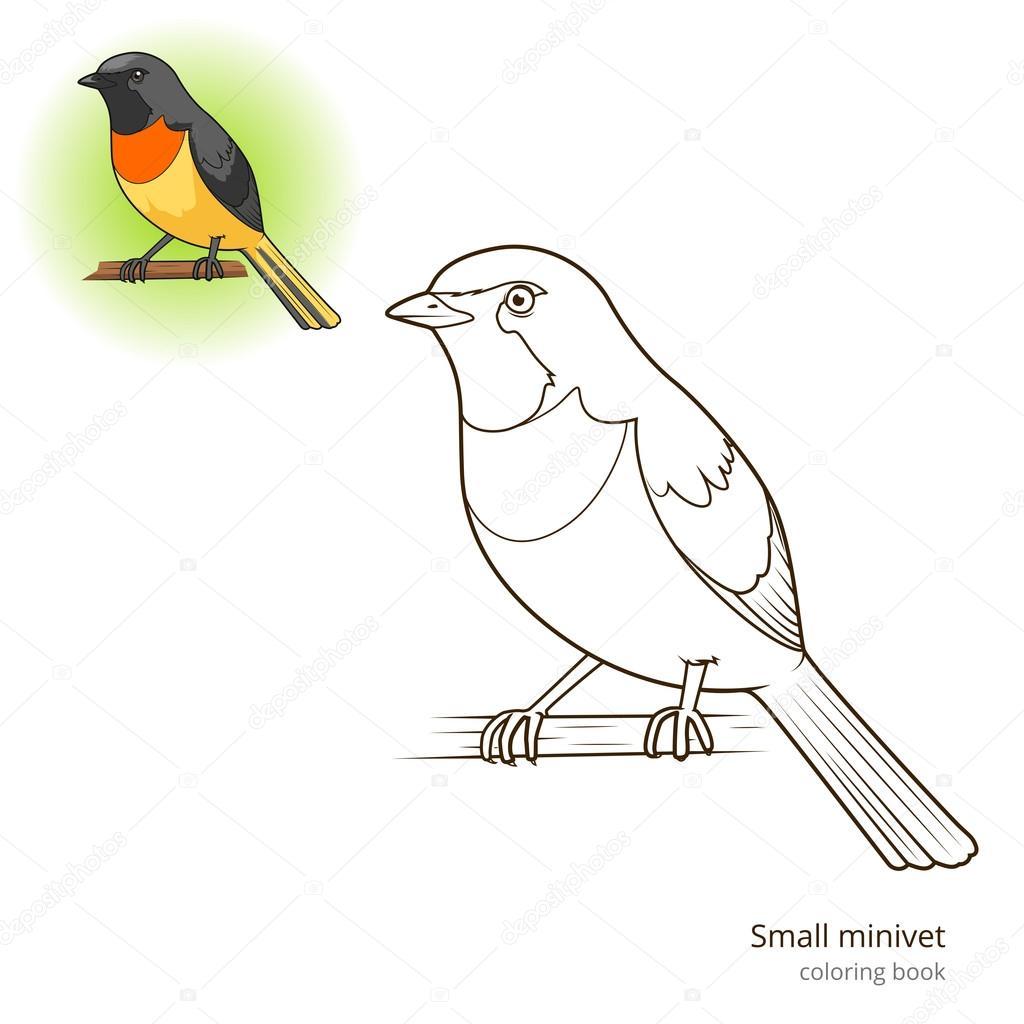 Küçük Minivet Kuş Kitap Vektör Boyama Stok Vektör
