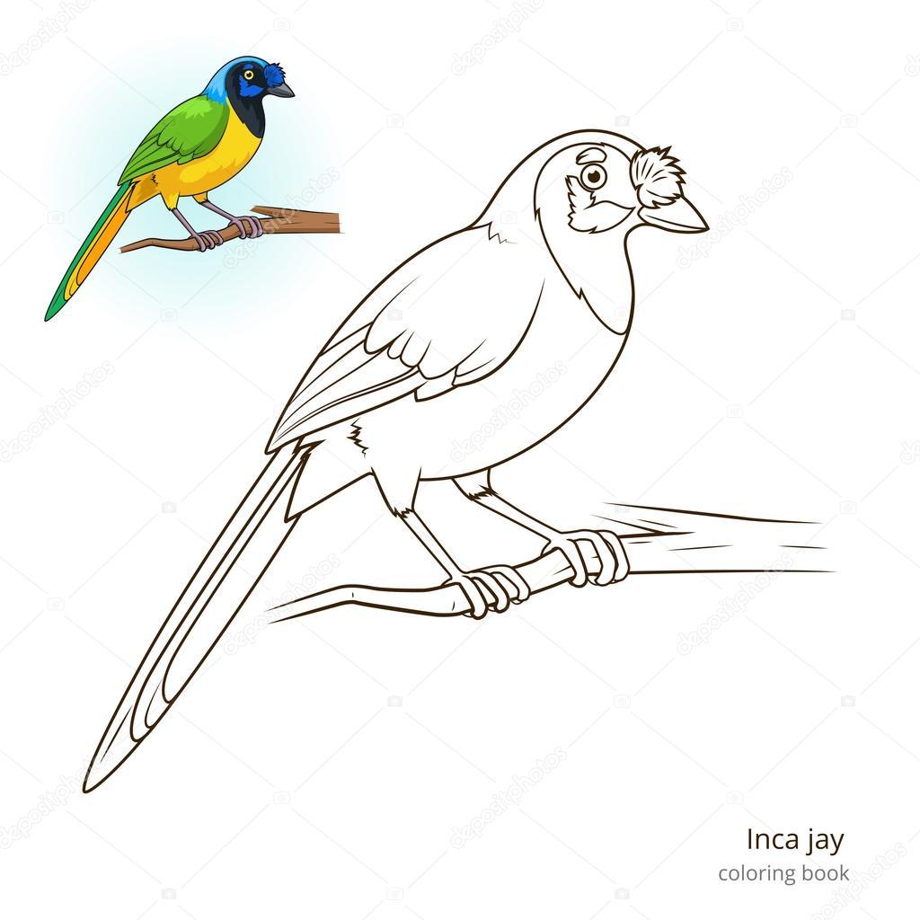 Pájaro del jay de Inca para colorear vector libro — Archivo Imágenes ...
