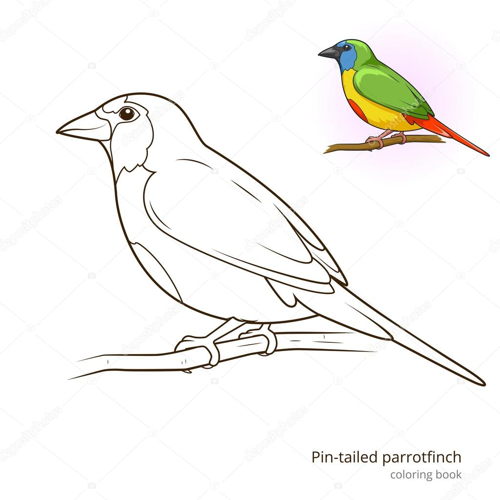 Perno Cola Pájaro Pinzón Loro Para Colorear Vector Libro