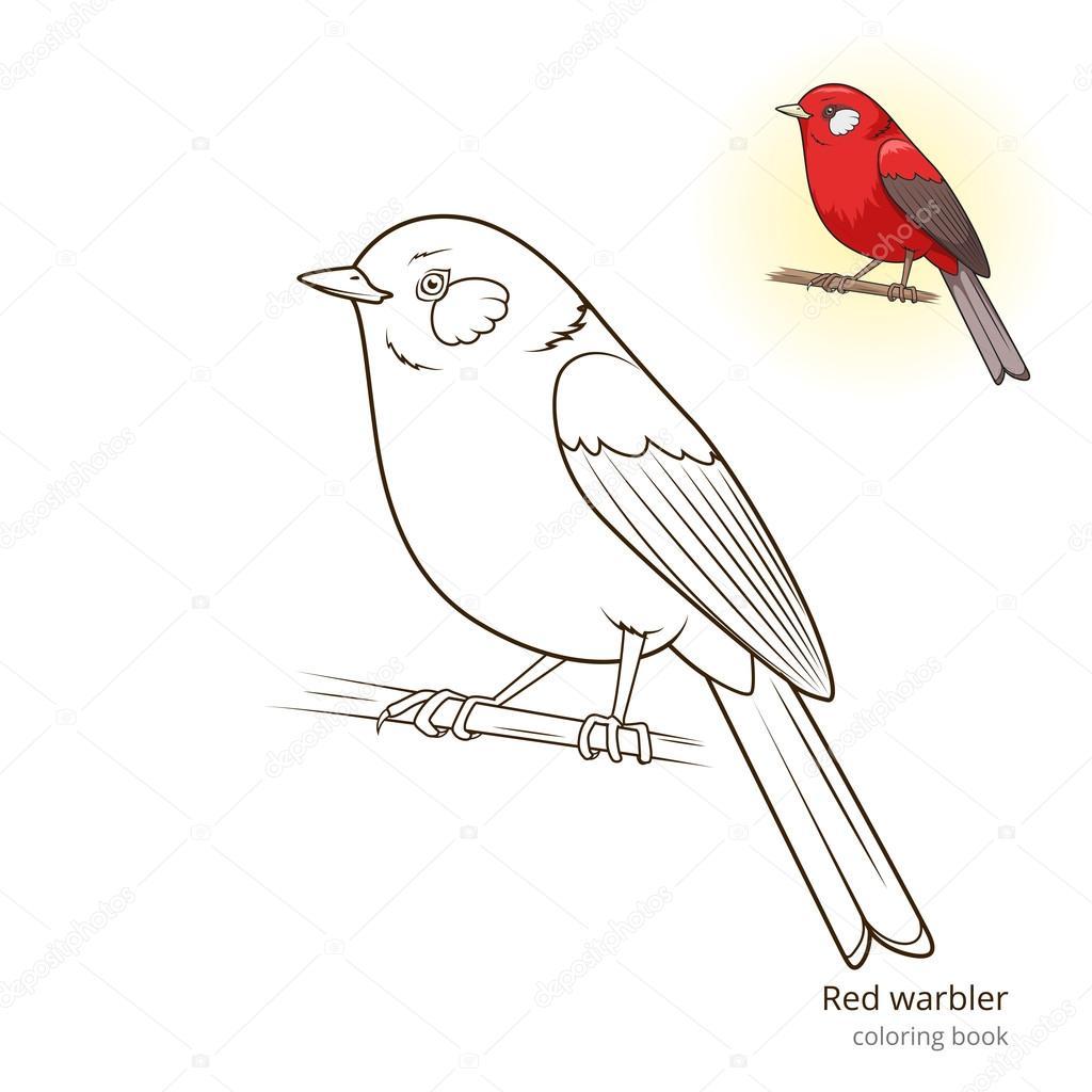 Pájaro rojo Reinita vector libro de colorear — Vector de stock ...
