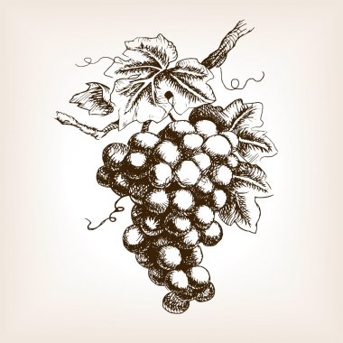 Bunch of grapes  sketch style vector illustration. Old engraving imitation. Hand drawn sketch imitation stock vector