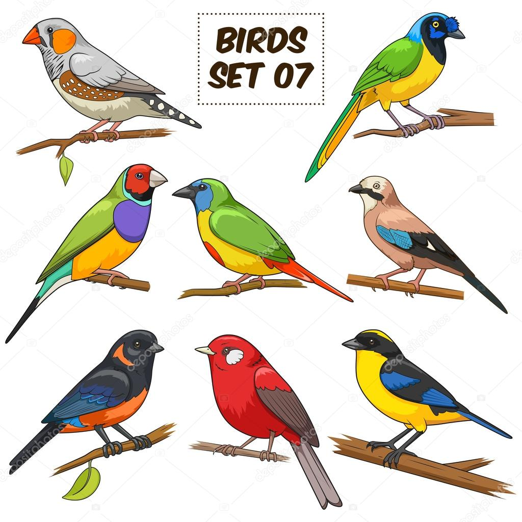Bird Set Cartoon Colorful Vector Illustration Stock Vector