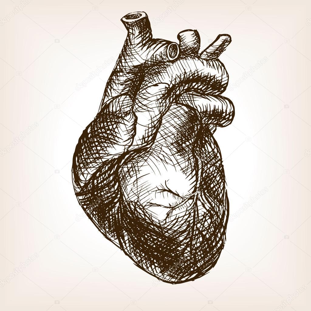 Ilustración De Vector De Corazón Humano Dibujo Estilo Archivo