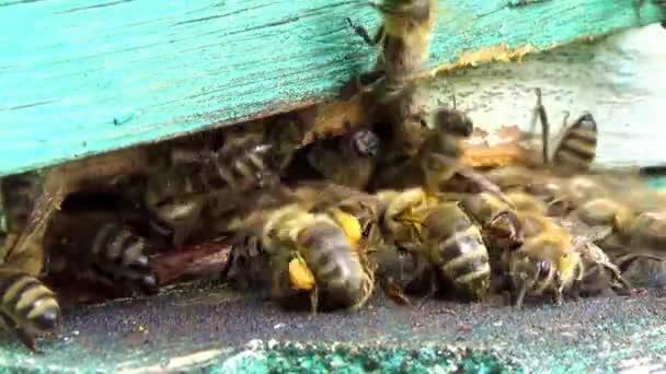 včely medonosné kolem jejich úlu