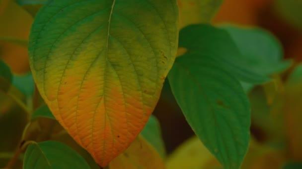 Detailní záběr podzim podzim listy