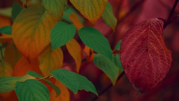 Close-up shot of Autumn Fall Multicolor leaves