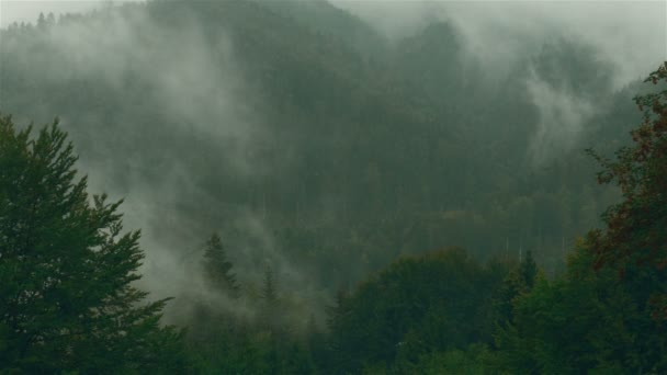 Timelapse of a Pine Tree Forest with Mist and Fog in Transylvania, Romania