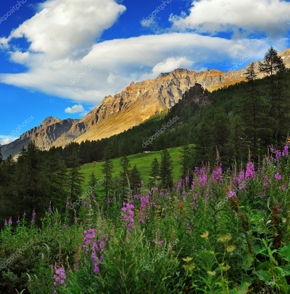 Gran Paradiso National Park mountains with willow herbs