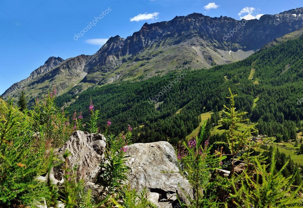 view on alpien stones and flowers in valley Valle dAosta