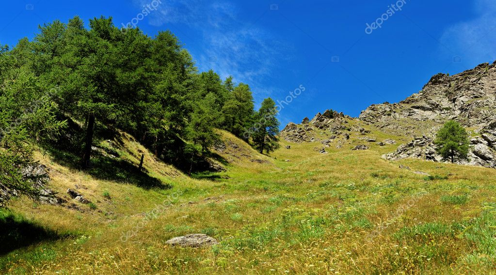 view up on alpine landscape with rocks and spruce