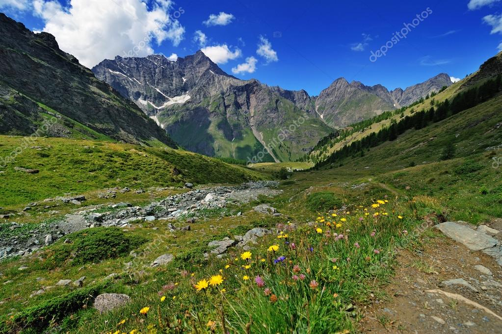 alpine meadow in Valle dAosta mountains