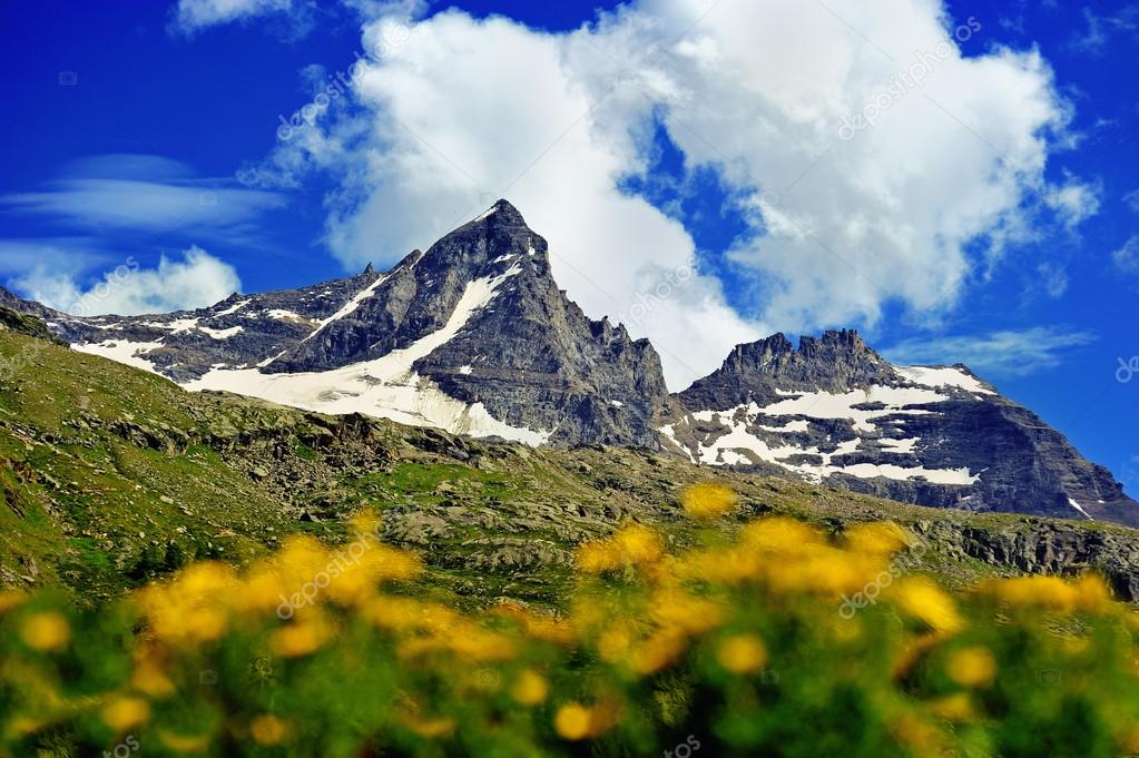 great Alps mountains with yellow flowers