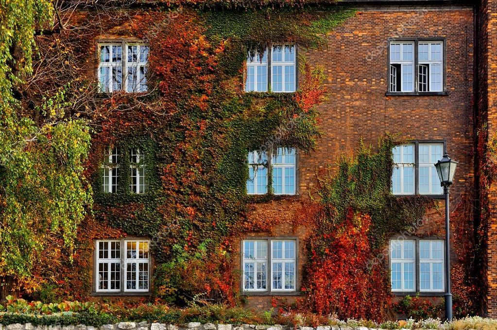 Fogli di autunno con le finestre bianche sulla vecchia for Finestre bianche