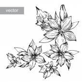 Fekete-fehér gravír vektor elszigetelt virág liliom