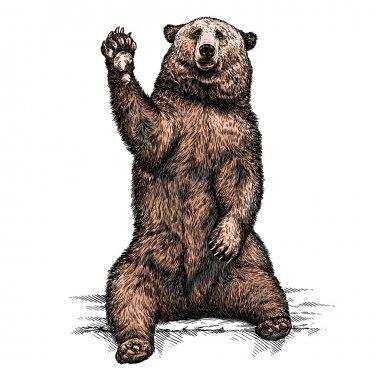 engrave bear illustration