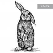 Fotografie rytý obrázek králíka