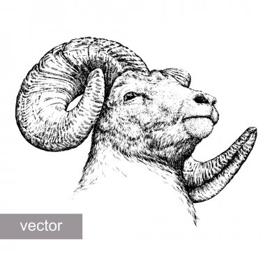 engrave isolated sheep illustration