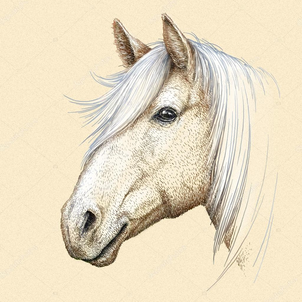ᐈ Wallpaper Of Horse Stock Drawings Royalty Free Horse Outline Images Download On Depositphotos