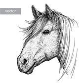 gravír ló illusztráció
