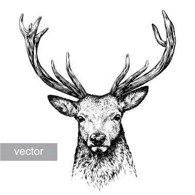 Engrave isolated deer vector illustration sketch. linear art stock vector