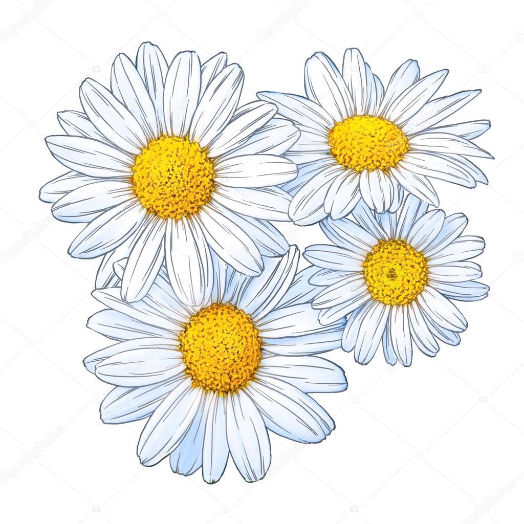 engrave flower illustration