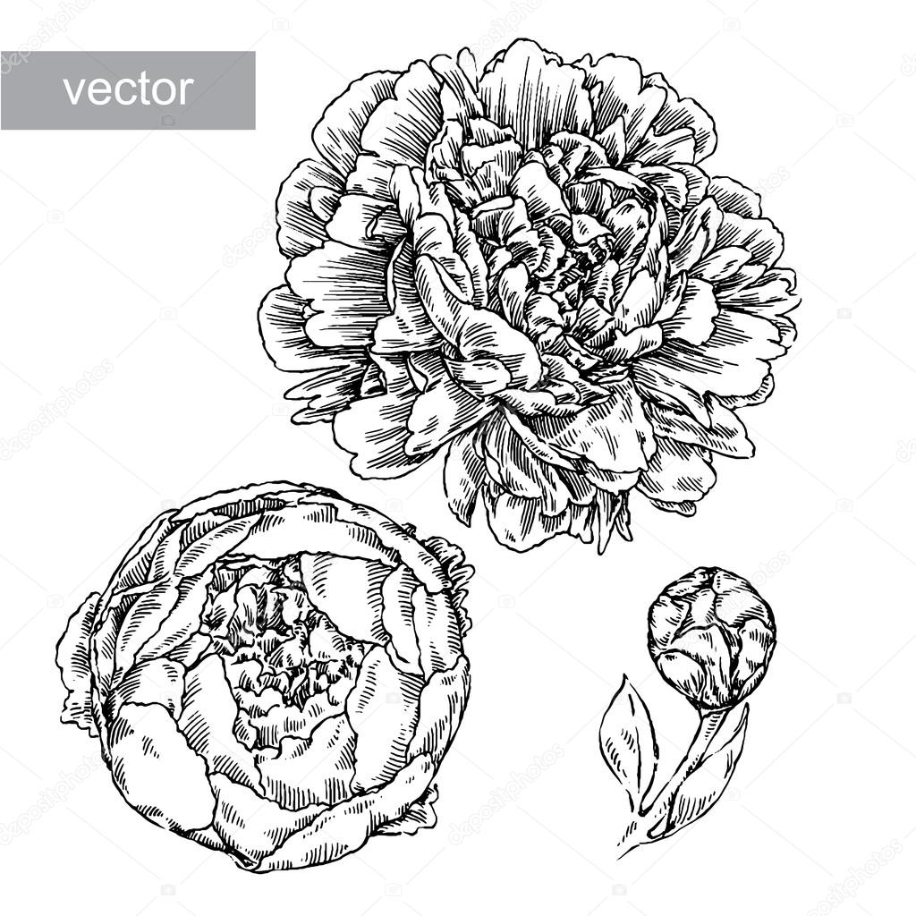 engrave flower illustration