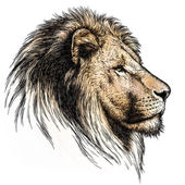 rytý obrázek lva